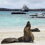 Galapagos sea lions on the beach with National Geographic Endeavour