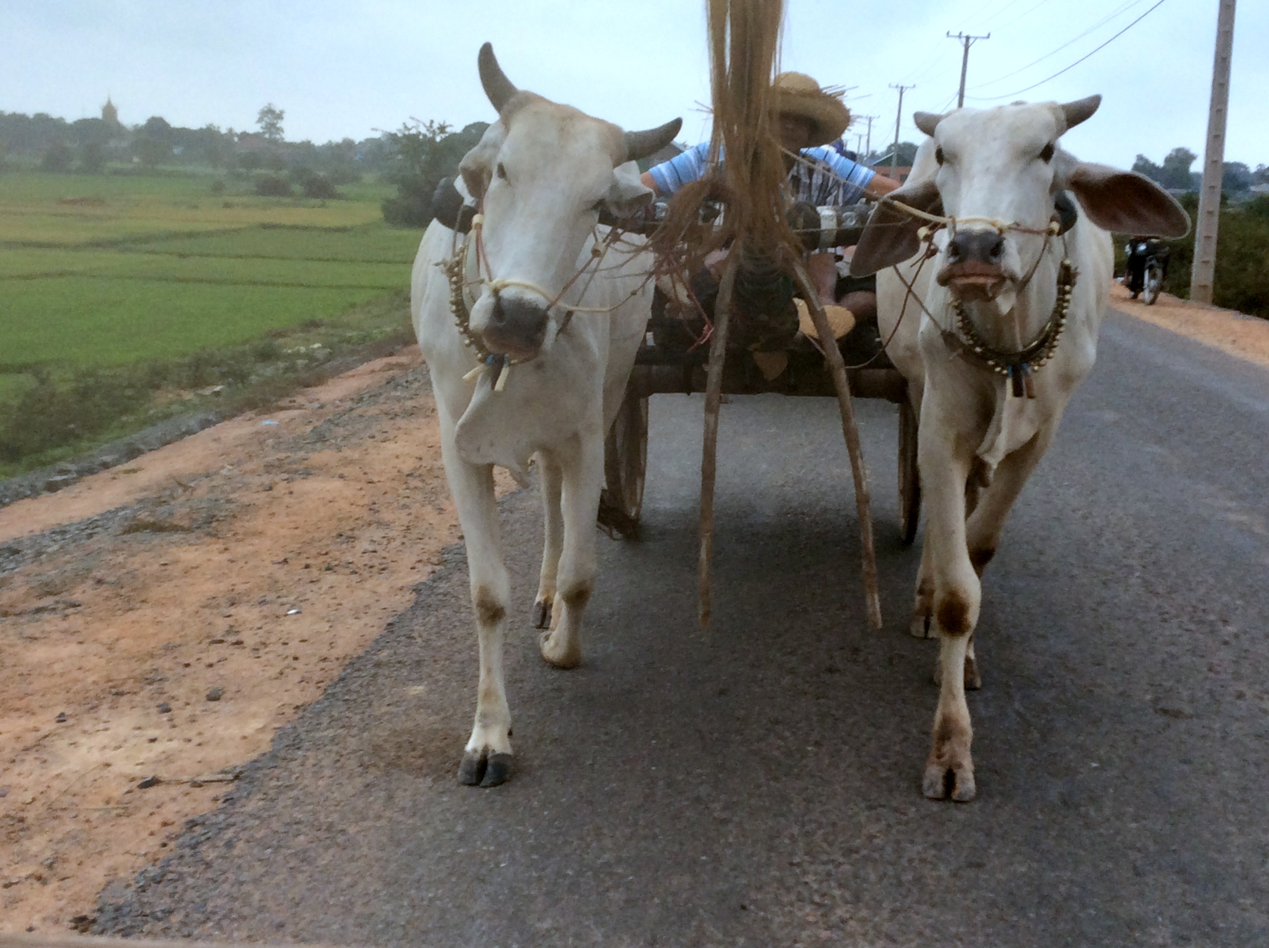 A view of the Cambodian countryside from the oxcart during Mekong River cruise