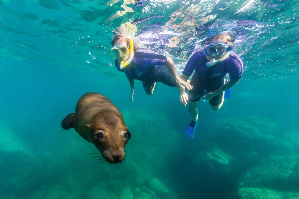 Curious young sea lion with snorkelers at Los Islotes, Baja ,Mexico