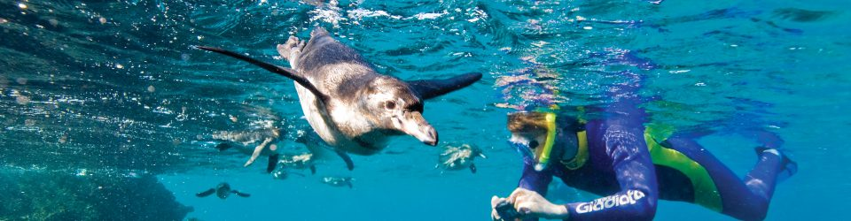 Galapagos Expedition 6 nights Lindblad -National Geographic